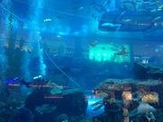 Diving in the Dubai Mall aquarium