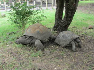 Guess what these tortoises have just been up to? ;)