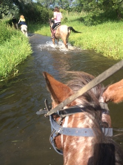 Wading on horseback