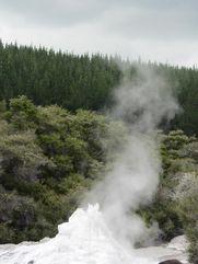 Lady Knox geyser 2