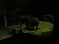 An elephant in the dark
