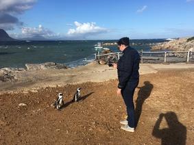 Betty's Bay penguin colony (3)