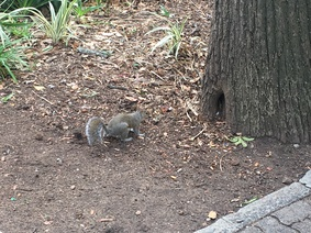 Squirrel in the Company Garden