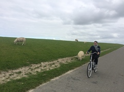 Cycling along the dike